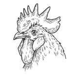 Mano del gallo dibujada Foto de archivo libre de regalías