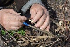 Mano del hombre del jardinero que injerta el manzano foto de archivo
