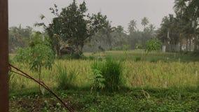 Mano del hombre que abre la ventana con sorprender el fondo verde tropical y la lluvia fresca Isla de Bali almacen de video
