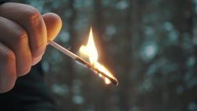 Mano del hombre que sostiene el palillo ardiente del partido en bosque almacen de video