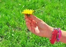 Mano del niño con la flor Imagen de archivo libre de regalías