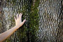 Mano del niño en un tronco de árbol fotos de archivo