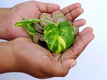 Mano del niño que sostiene monedas y la pequeña planta Imágenes de archivo libres de regalías