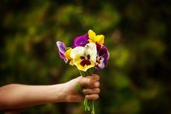 Mano del niño que sostiene una flor de los pensamientos del ramo Foco para las flores imágenes de archivo libres de regalías
