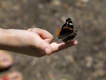Mano del niño y de la mariposa Imagen de archivo