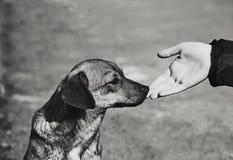 Mano del niño y perro sin hogar solo Imagen de archivo