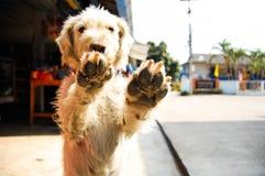 Mano del perro Fotos de archivo