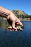 Mano del pescatore con i pesci Immagini Stock