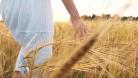 Mano del ` s de la mujer que corre a través de campo de trigo Primer conmovedor de los oídos del trigo de la mano del ` s de la m almacen de metraje de vídeo