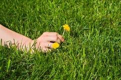 Mano del `s de la mujer que escoge una flor amarilla imagen de archivo