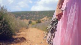 Mano del ` s de la mujer que sostiene las flores de la lavanda metrajes
