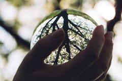Mano del ` s de la mujer que sostiene una esfera de cristal Foto de archivo