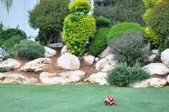 Mano del ` s de la novia con un ramo rojo en un vestido blanco en los arbustos ornamentales hermosos de un аnd de la hierba verd Foto de archivo libre de regalías