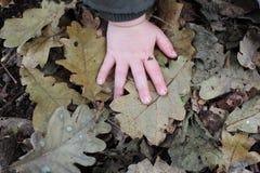 Mano del ` s del niño en hojas de otoño Imagen de archivo
