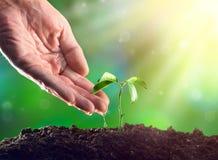 Mano del ` s dell'agricoltore che innaffia una pianta Crescita della plantula Fotografie Stock Libere da Diritti
