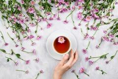 Mano del ` s della donna che giudica tazza di tè circondata dalle margherite rosa Immagine Stock Libera da Diritti