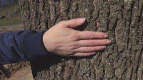 Mano del ` s della donna sull'albero stock footage