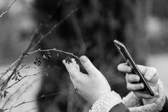 Mano del ` s della ragazza con uno smartphone che prende le immagini di un ramo del crespino Fotografie Stock Libere da Diritti