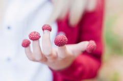 Mano del ` s del pequeño niño con las frambuesas en los fingeres fotos de archivo