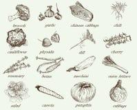 Mano del vector de las verduras dibujada Imagenes de archivo