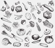 Mano del vector de las verduras dibujada Foto de archivo libre de regalías