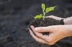 Mano dell'agricoltore che tiene suolo con la pianta dell'alberello, l'ecologia ed il concetto dell'ambiente immagine stock libera da diritti