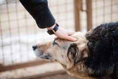 Mano dell'essere umano e del cane Fotografie Stock