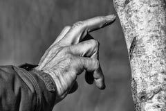 Mano dell'uomo su un albero in bianco e nero Fotografie Stock