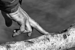 Mano dell'uomo su un albero in bianco e nero Immagine Stock Libera da Diritti
