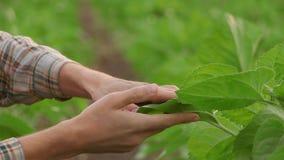 Mano della donna che tiene una piccola pianta verde dell'albero, vista superiore video d archivio
