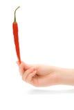 Mano della donna con il peperoncino rosso Immagine Stock