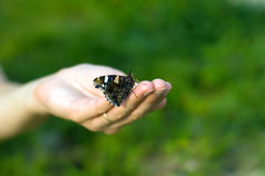 mano della farfalla Fotografia Stock Libera da Diritti