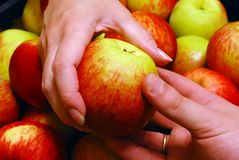 mano della mela a Immagini Stock