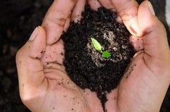 Mano della pianta del germoglio della tenuta dell'agricoltore Coltivando e consolidando albero Immagini Stock Libere da Diritti