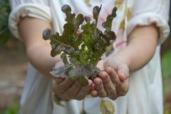 Mano della signora che tiene una pianta giovane fresca. Fotografia Stock