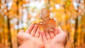 Mano delle foglie cadenti di autunno Immagini Stock Libere da Diritti