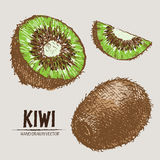 Mano detallada del kiwi del color del vector de Digitaces dibujada Fotos de archivo