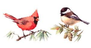 Mano determinada septentrional del ejemplo de la acuarela de los pájaros del cardenal y del Chickadee dibujada ilustración del vector