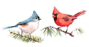 Mano determinada septentrional del ejemplo de la acuarela de los pájaros del cardenal y del paro dibujada stock de ilustración