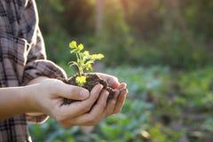 Mano di agricoltura sull'albero del bambino Fotografie Stock