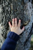 Mano di Childs sull'albero Immagini Stock Libere da Diritti