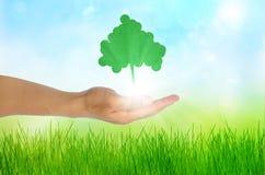 Mano di concetto di Eco ed un albero Fotografia Stock Libera da Diritti