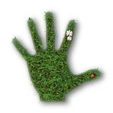 Mano di erba verde Fotografia Stock Libera da Diritti