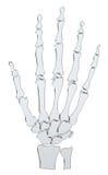 Mano di scheletro astratta illustrazione di stock