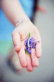 Mano di una ragazza del bambino con i fiori viola Immagini Stock