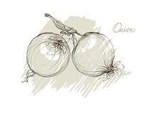 Mano di vettore che disegna le cipolle realistiche delle collezioni royalty illustrazione gratis