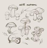 Mano di vettore che disegna un insieme dei funghi Fotografie Stock Libere da Diritti