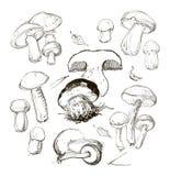 Mano di vettore che disegna un insieme dei funghi Immagini Stock