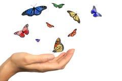 Mano di Womans che rilascia le belle farfalle Fotografia Stock Libera da Diritti