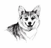 Mano dibujada, bosquejo blanco y negro del perro de perrito del ejemplo stock de ilustración